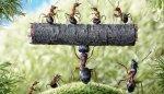 Ants Words